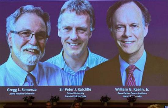 برندگان نوبل پزشکی,اخبار پزشکی,خبرهای پزشکی,بهداشت