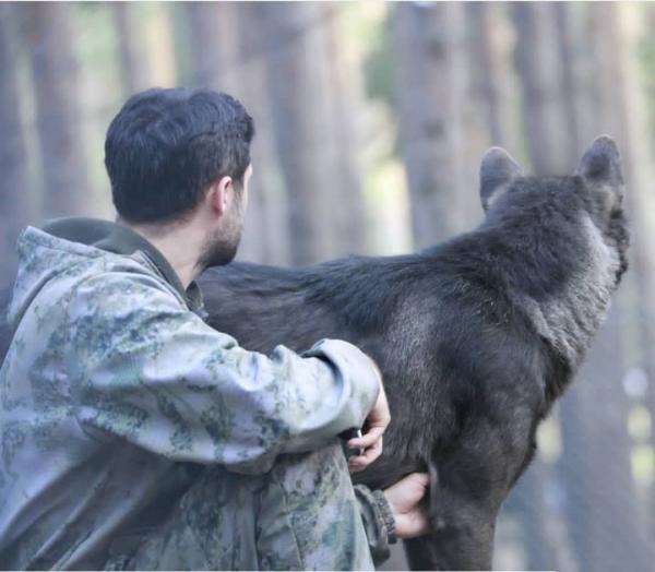 زندگی مرد روسی با گرگها,اخبار جالب,خبرهای جالب,خواندنی ها و دیدنی ها