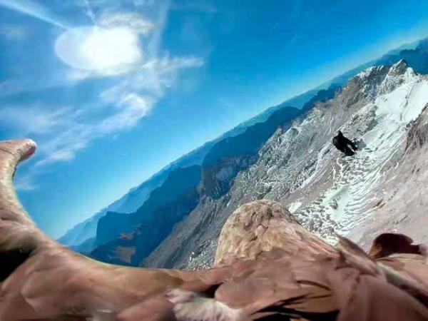 رشته کوه آلپ,اخبار جالب,خبرهای جالب,خواندنی ها و دیدنی ها
