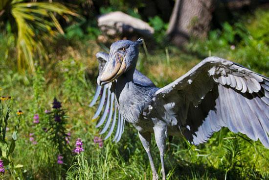 انقراض چند گونهی جانوری,اخبار جالب,خبرهای جالب,خواندنی ها و دیدنی ها
