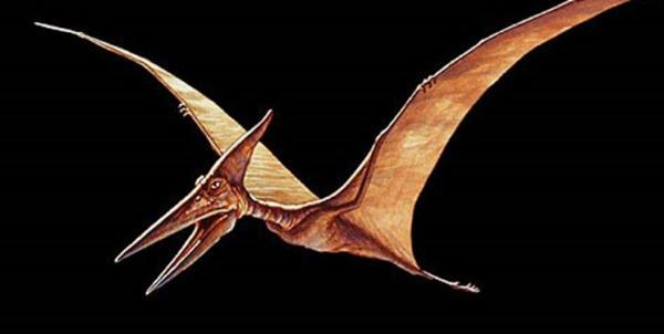 کشف فسیل دایناسور,اخبار جالب,خبرهای جالب,خواندنی ها و دیدنی ها
