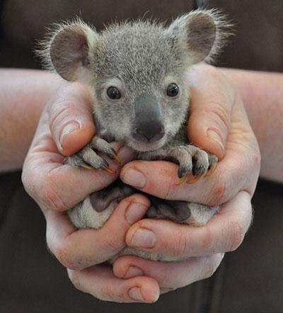 حیوانات,اخبار جالب,خبرهای جالب,خواندنی ها و دیدنی ها