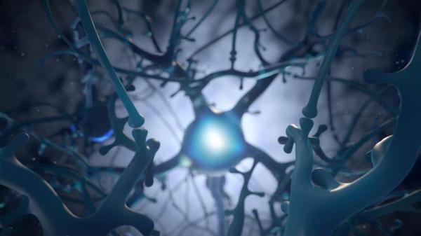 ارتباط فعالیت بیش از اندازه مغز با کوتاهی عمر,اخبار پزشکی,خبرهای پزشکی,تازه های پزشکی