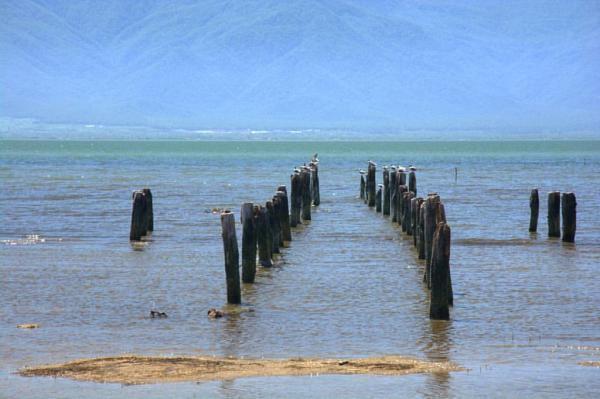 فکهای دریای خزر,اخبار اجتماعی,خبرهای اجتماعی,محیط زیست