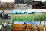 قیمتهای خرید محصولات کشاورزی,اخبار اقتصادی,خبرهای اقتصادی,کشت و دام و صنعت