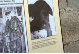 حبس ابد برای سگ,اخبار جالب,خبرهای جالب,خواندنی ها و دیدنی ها