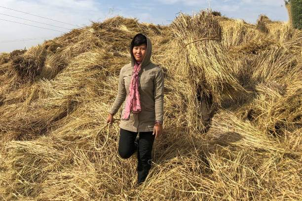 تصاویر برداشت محصولات کشاورزی در کره شمالی,عکس های کارگران کره شمالی,تصاویر وضعیت غذایی در کره شمالی