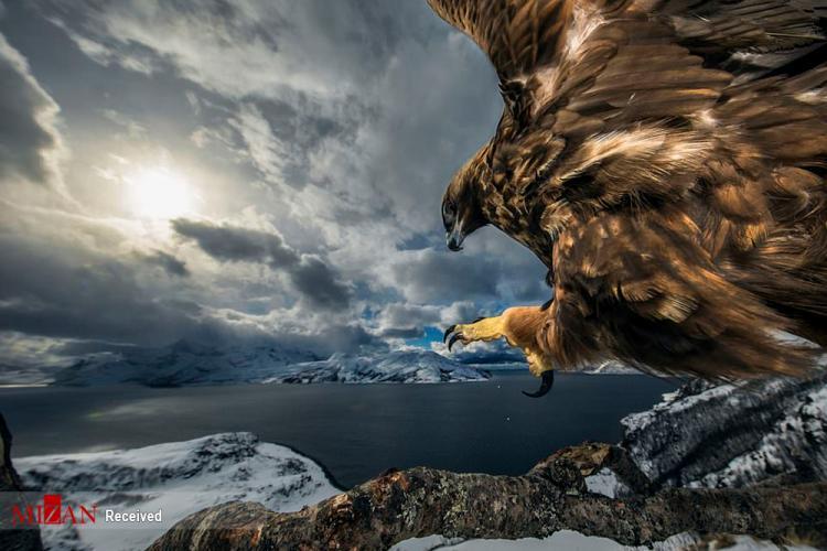 تصاویر برگزیده حیات وحش در سال ۲۰۱۹,عکس های برگزیده حیات وحش در سال ۲۰۱۹,تصاویر حیات وحش
