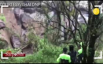فیلم/ مرگ شش فیل که میخواستند همدیگر را از سقوط در آبشار نجات دهند