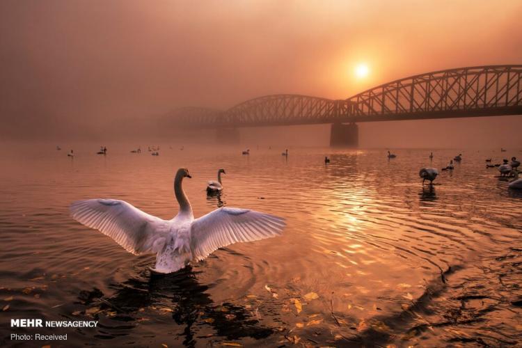 تصاویر منتخب طبیعت ۲۰۱۹,عکس های منتخب طبیعت ۲۰۱۹,تصاویر برندگان مسابقه عکاسی طبیعت