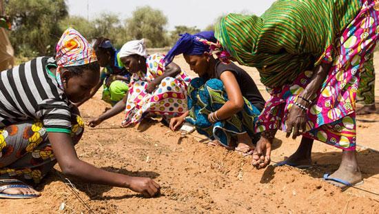 ساخت دیوار بزرگ سبز در آفریقا,اخبار جالب,خبرهای جالب,خواندنی ها و دیدنی ها