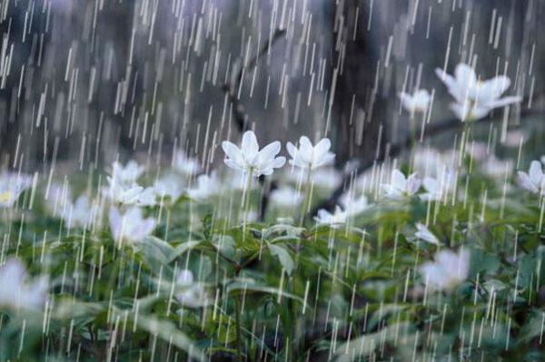 ورود سامانه بارشی جدید به غرب کشور,اخبار اجتماعی,خبرهای اجتماعی,وضعیت ترافیک و آب و هوا