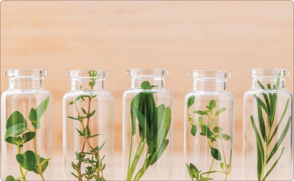 گیاهان طبیعی,اخبار پزشکی,خبرهای پزشکی,مشاوره پزشکی