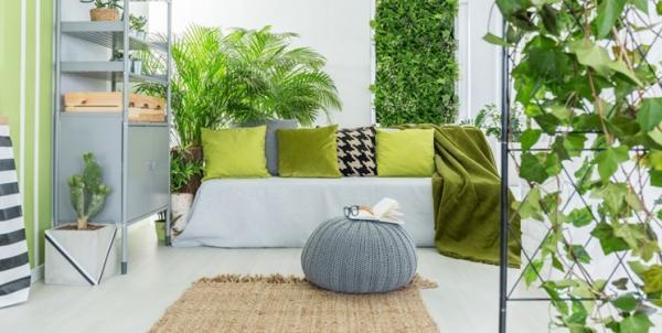 گیاهان آپارتمانی,اخبار علمی,خبرهای علمی,طبیعت و محیط زیست