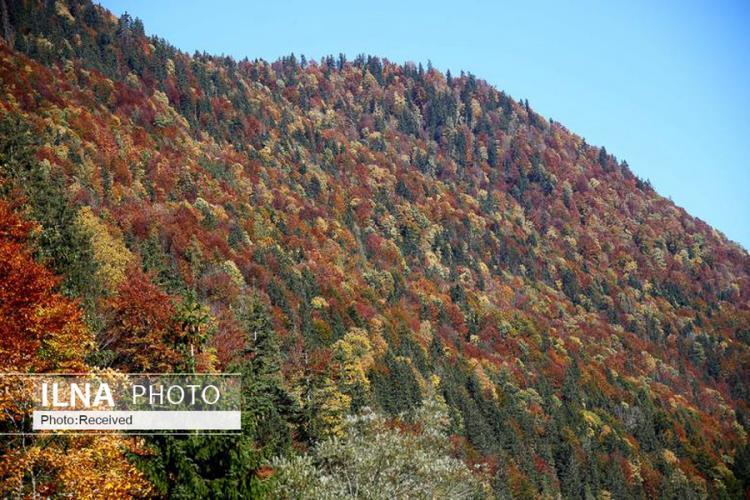 تصاویر فصل پاییز,عکس های طبیعت,تصاویر زیبا در پاییز