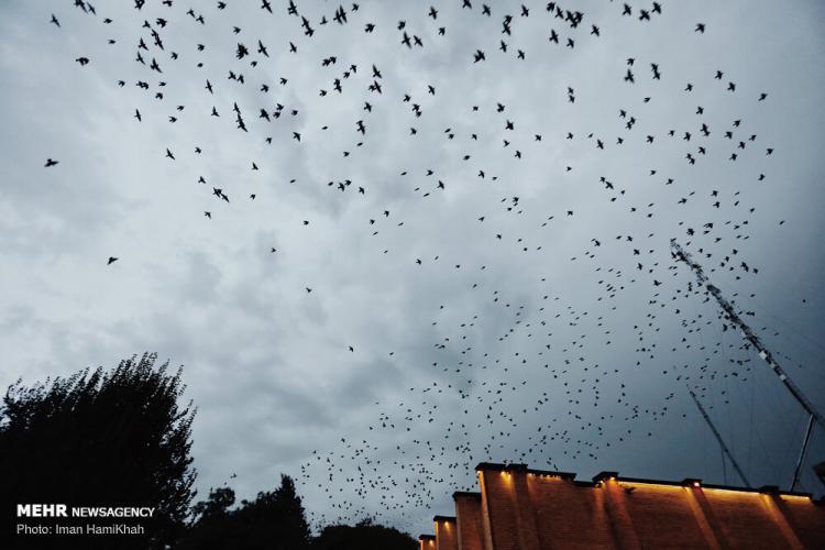 تصاویر میدان بوعلی سینای همدان,عکس های دیدنی از همدان,تصاویر روزهای بارانی در همدان