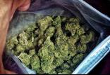 خطرات مصرف ماده مخدر گل,اخبار اجتماعی,خبرهای اجتماعی,آسیب های اجتماعی