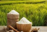برنج,اخبار اقتصادی,خبرهای اقتصادی,کشت و دام و صنعت