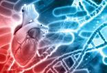 مقابله با بیماریهای ناشی از افزایش سن به کمک ژندرمانی,اخبار پزشکی,خبرهای پزشکی,تازه های پزشکی