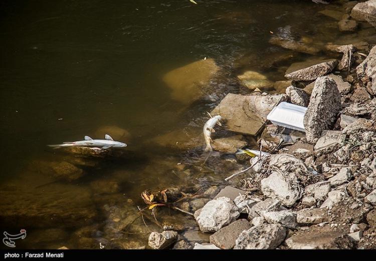 تصاویر رودخانه قرهسو کرمانشاه,عکس های طبیعت,تصاویر مسمومیت ماهی ها در رودخانه قرهسو کرمانشاه