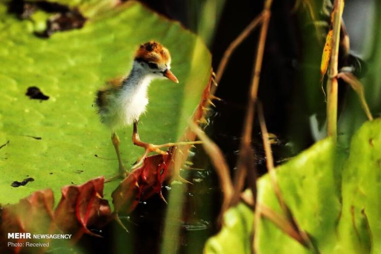 تصاویر منتخب حیات وحش هفته,عکس های حیات وحش,تصاویر دیدنی از حیوانات