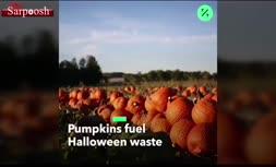 فیلم/ دور ریخته شدن 8 هزار تن کدو برای «جشن هالووین»