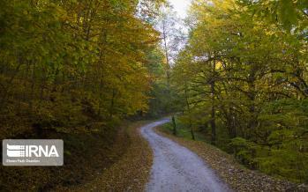 تصاویر جنگل هیرکانی,عکس های پاییز هیرکانی,تصاویر پاییز در جنگل هیرکانی
