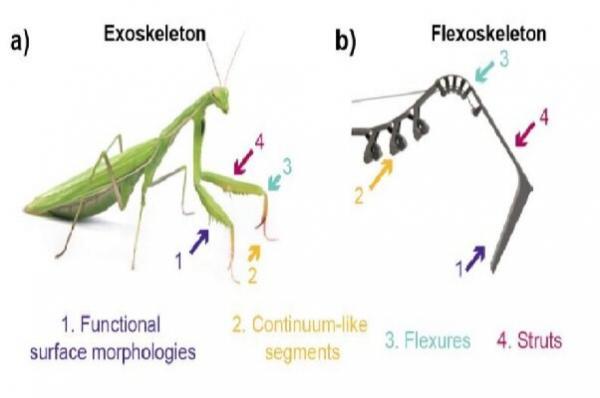 چاپ اسکلت سه بعدی حشرات,اخبار علمی,خبرهای علمی,اختراعات و پژوهش