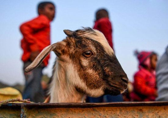ماراتن خونین حیوانات,اخبار جالب,خبرهای جالب,خواندنی ها و دیدنی ها