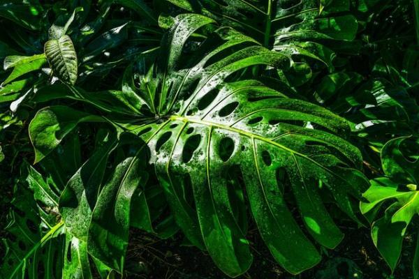 گیاهان,اخبار اجتماعی,خبرهای اجتماعی,محیط زیست