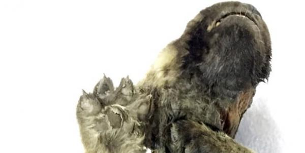 جسد هزار ساله یک سگ,اخبار جالب,خبرهای جالب,خواندنی ها و دیدنی ها