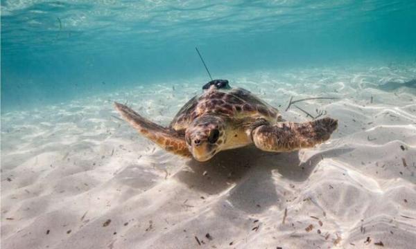 بررسی اقیانوسها با کمک حیوانات دریایی,اخبار علمی,خبرهای علمی,طبیعت و محیط زیست