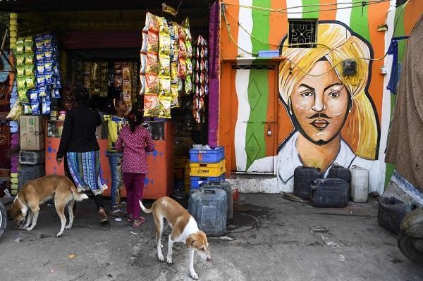 زاغه رنگی هند,اخبار جالب,خبرهای جالب,خواندنی ها و دیدنی ها