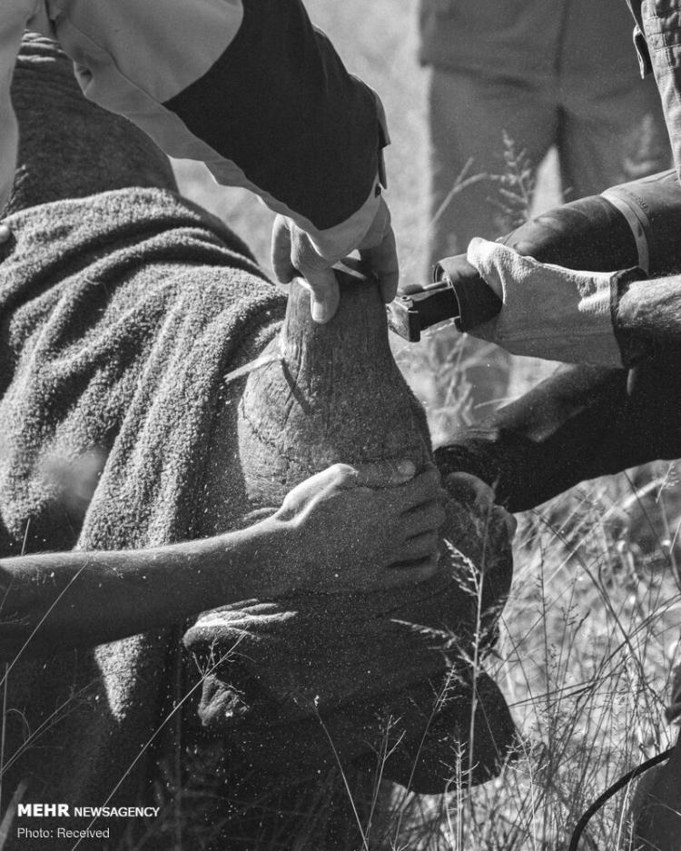 تصاویر برندگان مسابقه عکاسی انجمن اکولوژی انگلیس,عکس های برندگان مسابقه عکاسی انجمن اکولوژی انگلیس,تصاویر مسابقه عکاسی انجمن اکولوژی انگلیس