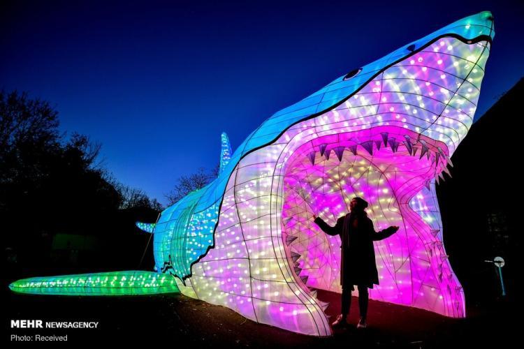 تصاویر جشنواره نور در چین,عکس های جشنواره نور در چین,تصاویر باغ وحش شهر کلن آلمان