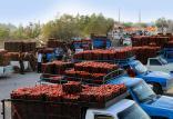 افزایش قیمت انواع میوه و تره بار,اخبار اقتصادی,خبرهای اقتصادی,کشت و دام و صنعت