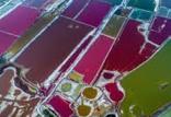 زمینهای نمکی سدیم,اخبار علمی,خبرهای علمی,طبیعت و محیط زیست
