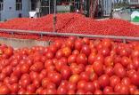گوجه فرنگی,اخبار اقتصادی,خبرهای اقتصادی,اصناف و قیمت