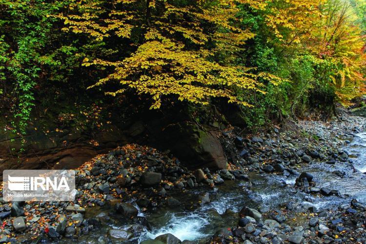 تصاویر پاییز ییلاق اورماملال,عکس های پاییز ییلاق اورماملال,تصاویر پاییز ییلاق اورماملال در غرب گیلان