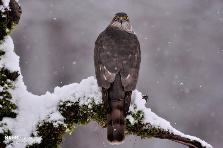 تصاویر منتخب حیات وحش,عکس های طبیعت,تصاویر محیط وحش