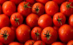 دلایل گرانی گوجهفرنگی,اخبار اقتصادی,خبرهای اقتصادی,کشت و دام و صنعت