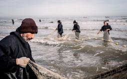 کاهش صید ماهیان استخوانی در گیلان,اخبار اقتصادی,خبرهای اقتصادی,کشت و دام و صنعت