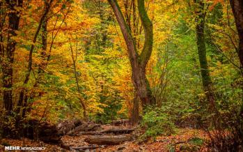 تصاویر جنگل های هیرکانی,عکس های پاییزی جنگل های هیرکانی,تصاویر دیدنی از جنگل های هیرکانی