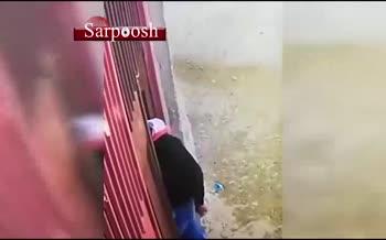 فیلم/ سارقی که با پراید، گوسفند می دزدد!