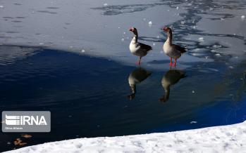 تصاویر پیست اسکی پولادکف سپیدان,عکس های پیست اسکی پولادکف سپیدان,تصاویر دمای هوای شهرستان سپیدان