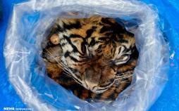 تصاویر حیات وحش,عکس های دیدنی از حیوانات,تصاویر منتخب حیات وحش