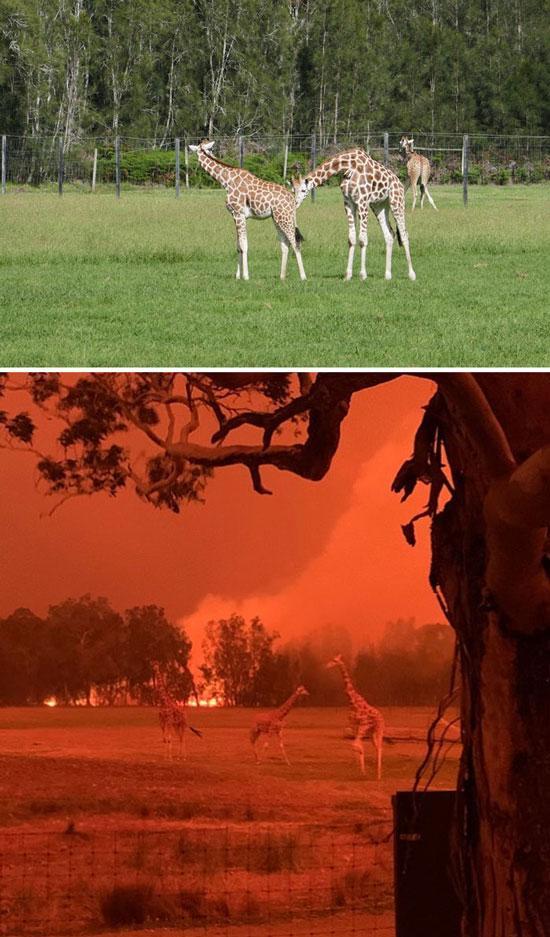 آتشسوزی در استرالیا,اخبار جالب,خبرهای جالب,خواندنی ها و دیدنی ها