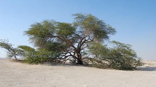 شگفتانگیزترین درختان جهان,اخبار جالب,خبرهای جالب,خواندنی ها و دیدنی ها