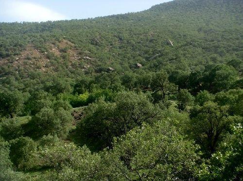 ۲ میلیون هکتار از جنگلها در اختیار نهادهای دولتی و نظامی است