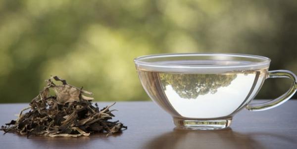 چای سبز,اخبار پزشکی,خبرهای پزشکی,تازه های پزشکی
